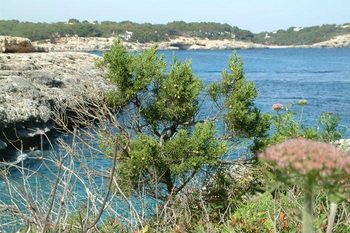 Mallorca - Chris Donnelly