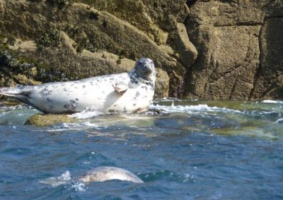 Grey Seal, Isles of Scilly - Laurie Jackson