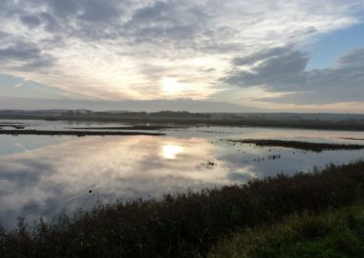 Titchwell, Norfolk - Laurie Jackson