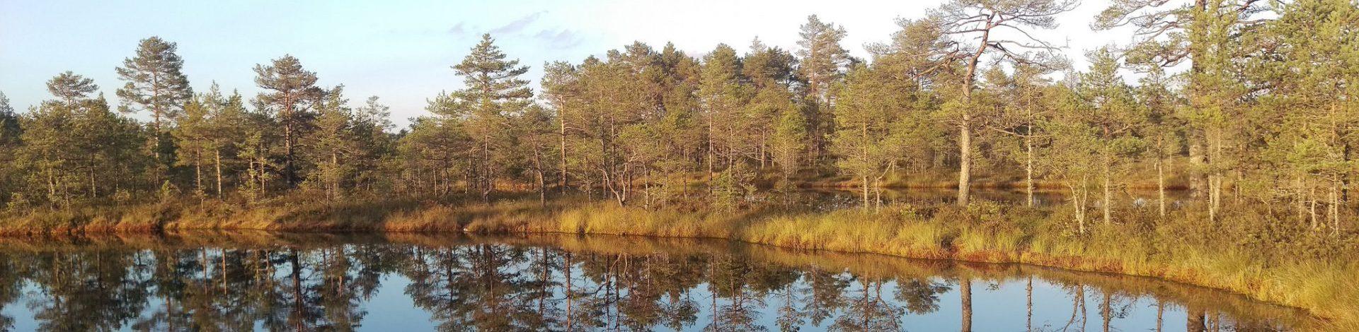 Viru-Bog-Estonia