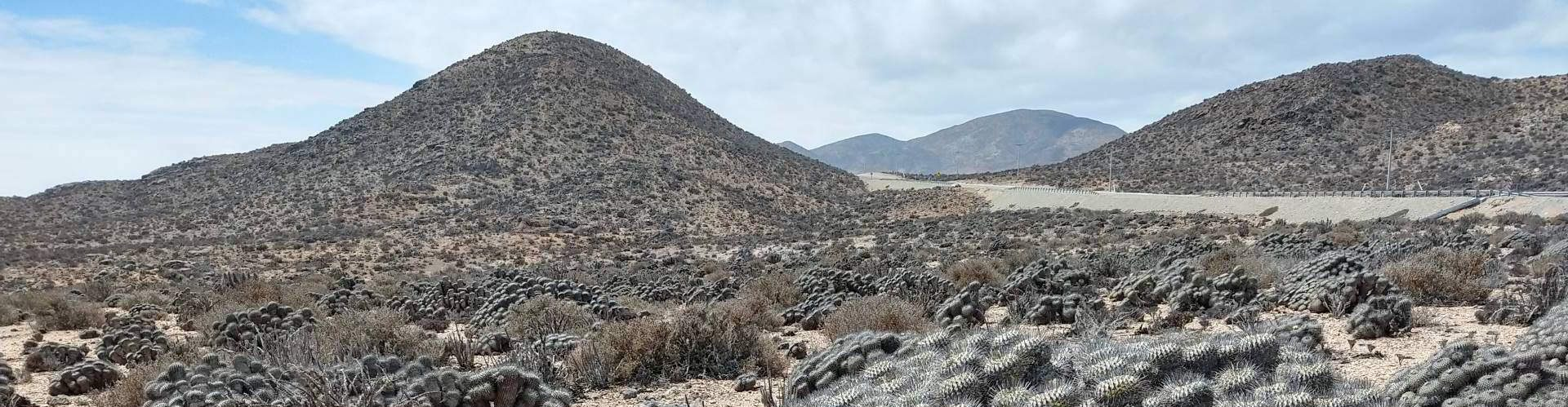 Carrizal-Bajo-Chile