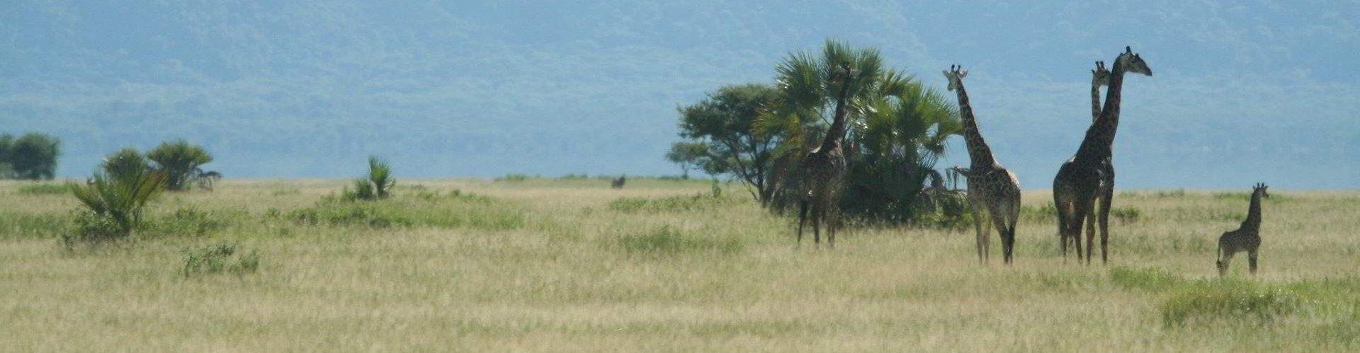 Maramboi-Camp-Tanzania