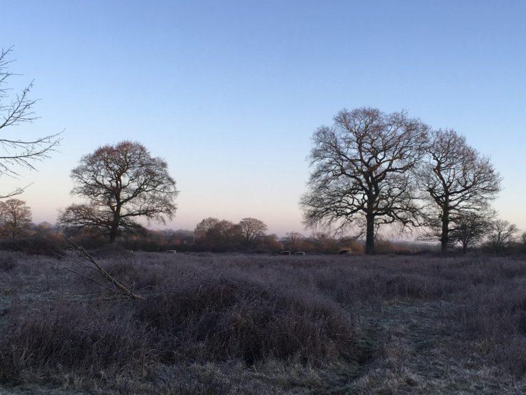 Knepp-Sussex