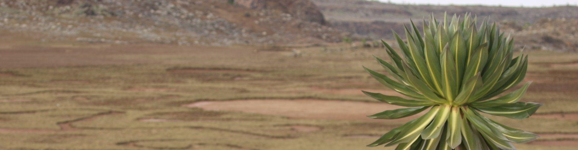 Sanetti-Plateau-Ethiopia