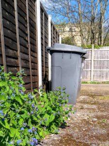 Green-Alkanet-and-bins