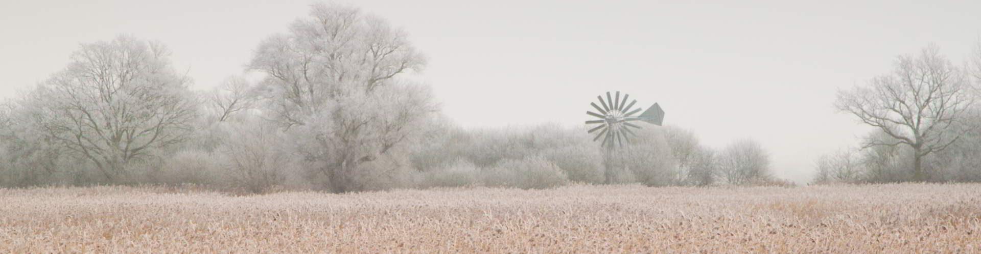 Reedbed-in-freezing-fog
