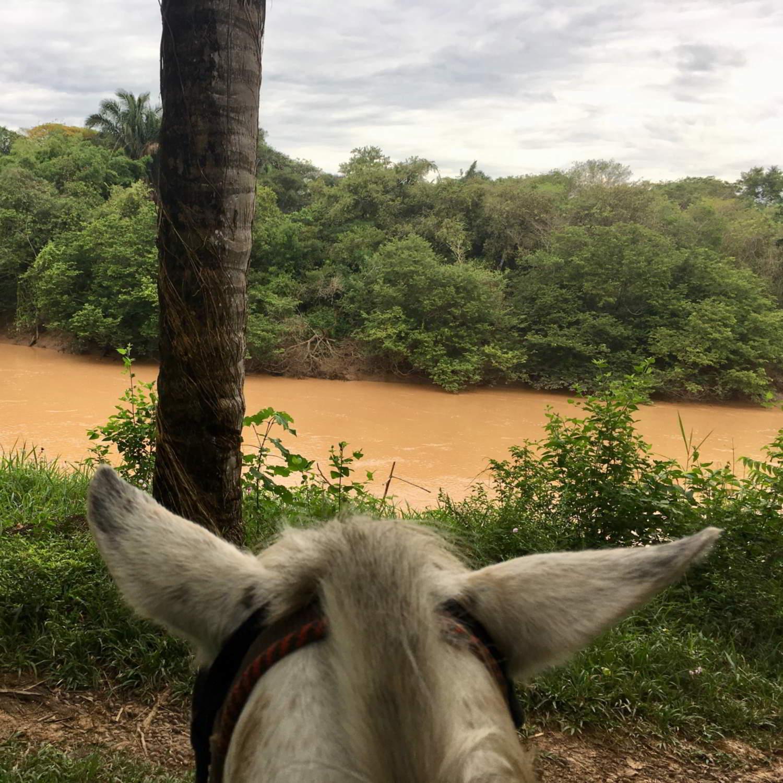 Hato-la-Aurora-Colombia