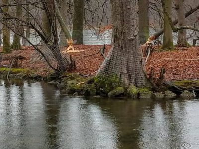 Schlosspark-Munich